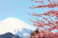 富士山への来訪外国人数や意識調査(フジヤマNAVI調べ)
