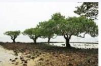 マングローブの世界「紅樹林海浜生態公園」深セン市福田区