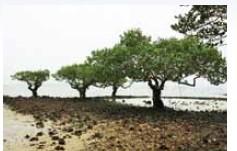 紅樹林海浜生態公園