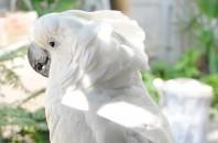旺角(モンコック)特集7・鳥と花に癒される