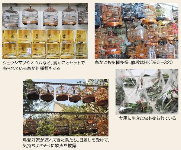 ジュウシマツやオウムなど、鳥かごとセットで売られている鳥が何種類もある