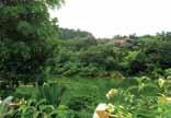 園博園 風景