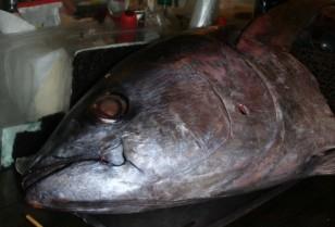 マグロ解体ショーも!新鮮な魚の日本料理屋「兄弟船」広州