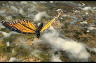 ドキュメンタリー映画「Flight of the Butterflies」公開