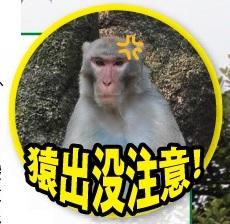 猿出没注意