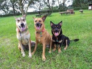 HKDRの犬たち