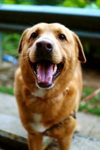 HKDRの犬