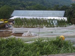カドリー農園&植物園