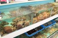 堅尼地城(ケネディータウン)韓国海鮮蒸し鍋「The Seafood Kitchen」