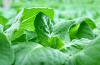 日本の最先端技術。健康・安心・安全に配慮した「植物工場」SCATIL