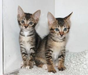 MOMO(右)とCOCO(左)