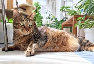 ペット特集3・ペットサロンと愛猫インタビュー