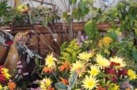 国際的な花の見本市「国際フラワー産業見本市」が広州開催