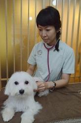 陳書琳 獣医師(Dr. Chen Shulin)