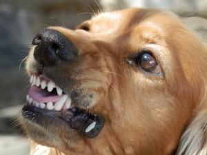 人間と犬との正しい関係作りを