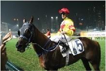ハッピーバレー競馬場の馬