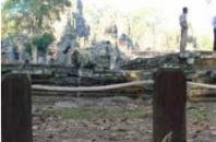 サバイバル環境に生きるカンボジアの犬