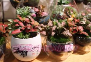 香港動画 Flower Market