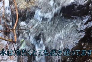 香港動画 ハイキング特集