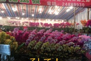 香港動画 春節イベント【花市】