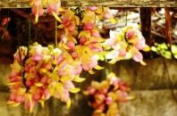 広州天河区にある「華南植物園」