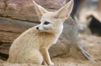 深圳野生動物園 動物たちと触れ合う