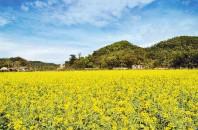 红山村 Hongshan village