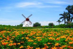 Travel – Sunflower Garden 百万葵园