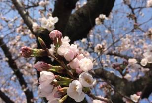 ムラサキの徒然日記 第4回「広州から日本へ」