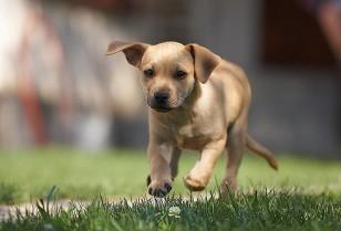 ペットが飼い主のメンタルヘルスに役立つ5つの理由