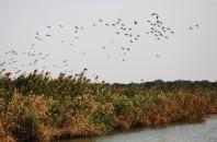 広州のマスト観光スポットNansha湿地公園