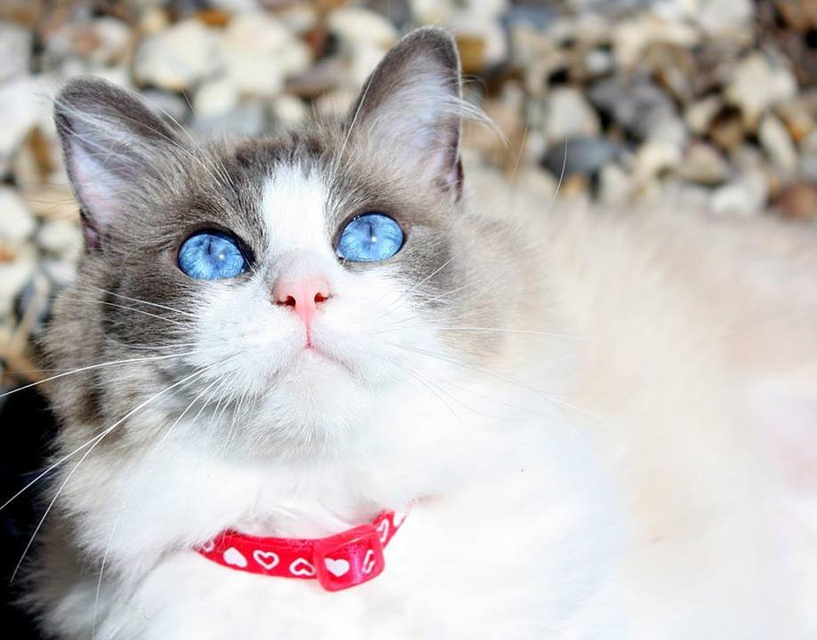 cat-2105657_960_720