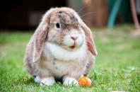 ウサギを飼う時のポイント