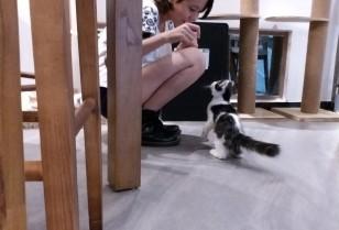 ふわふわの幸せな猫カフェ「Free & Fun」広州