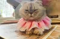 猫と中国語を学ぼう「猫音学園」深圳