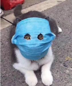ネコも顔面マスク