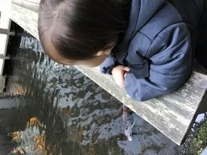 「雅叙園」の鯉を見つめる息子
