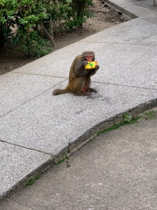 2年連続、同じ場所で、 猿に飲み物を盗られました(涙)