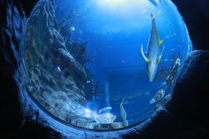 大水族館(2)