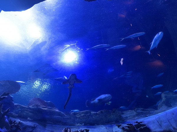 大水族館(1)